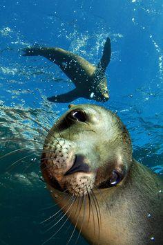 Sea Lion selfie?