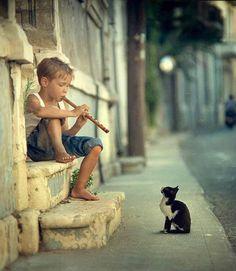 sweet cats, music, anim, kitten, flute, children, friend, little boys, kid