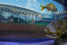 ballpark, miami marlins, parks, plate, backstop aquarium, sport thing, homes, marlin park, miami hurrican