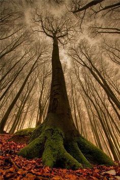 big treee