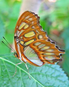 Çok güzel kelebek resimleri
