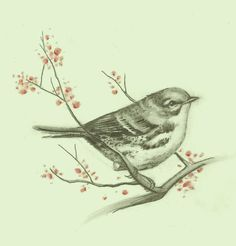 LOVE this sketch, looks like a cerulean warbler