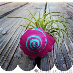 air plant in a hand-painted conch shell