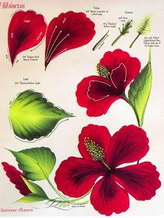 one stroke hibiscus