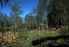 swamps | Swamps