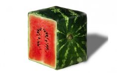 How to grow a square watermelon! #ThinkDifferent #Gardening