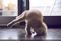 Cat hand stand