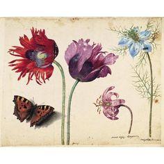 Jacques le Moyne de Morgues. Botanical Drawing. 1533