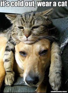 Cute!    #cats #dogs #funny #cute #sweet