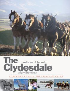 One of Scotland's unsung exports to the world, the Clydesdale was once widely used in farming, construction, commerce and in war.    Mary Bromilow has researched the breed and has lovingly collected a rare archive of photos many of which are presented in this beautiful book.    She charts the history of the Clydesdale and brings the status of these magnificent horses bang up to date. A must-have for horse lovers.