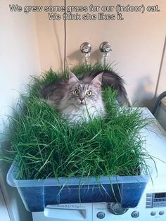 We grew some grass for our cat.