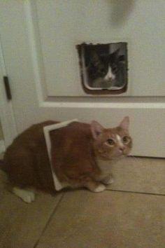 stuck in cat door