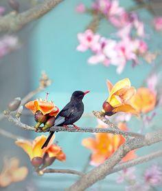 Pretty Little Bird Among the Flowers