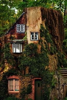 house built into a tree.