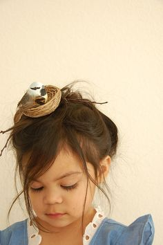 nest hair, little birds, bird nests, bird told