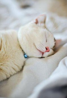 Kitteh Sleeping