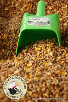 """The Sweet Smell of Molasses - Molasses calf feed has a sweet smell that farmers and calves alike enjoy! Commonly called a """"starter grain,"""" calves are given this sweet treat as they transition from milk to dry feed."""