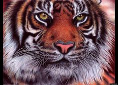 """""""Tiger""""  Look closely... it may be hard to hard to believe but the images below are actually drawings made by Portugal-based attorney, Samuel Silva. Silva, who describes his art as a """"hobby,"""" uses standard ballpoint pens for many of his drawings, sometimes working on a piece for over 45 hours."""