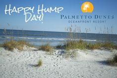 Happy Hump Day from Palmetto Dunes, Hilton Head Island