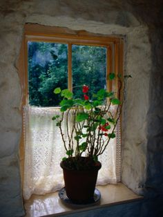 Cottage Window at Ulster Folk and Transport Museum, Down, Northern Ireland, United Kingdom love this..
