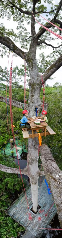 Amazon - up in the trees!/ Arriba en los árboles...