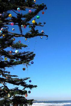 San Diego Christmas Tree // Ocean Beach