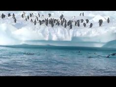 Jumping penguins video filmed in Antarctica.  Use with Apologia Zoology. #homeschool science, penguin lesson idea
