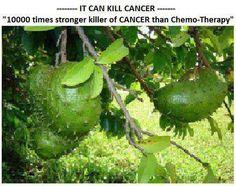 Fruit: cancer