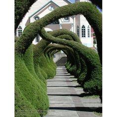 Topiary Arches at Zarcero, Costa Rica