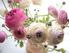 La Fleur Vintage: Know Your Flowers! (These are Ranunculus)