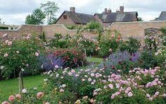 english rose garden | English rose garden!!!! | Old English Cottage Gardens