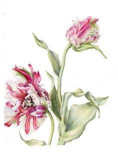 Tulipa Estella Rijnveld by Marianne Grundy-van Es