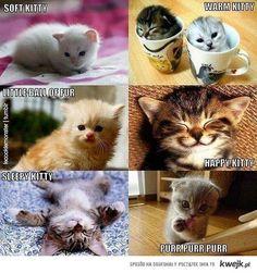 soft kitty ---- the Big Bang theory hahaha