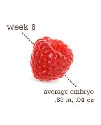 At week 8, baby is as big as a raspberry.