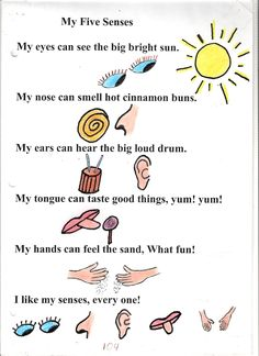 My 5 senses by aliki 5 sense poem