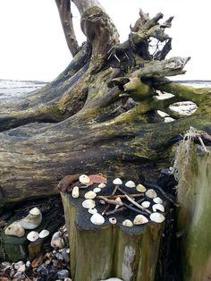 Altars:  Sea Witch Altar.