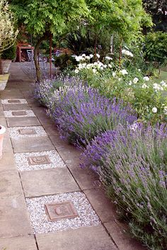 Lavender border!