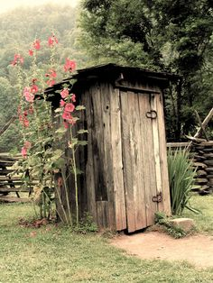 Just love hollyhocks...and outhouses too :o).