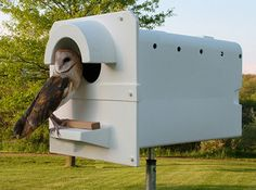Did you know Barn Owls will nest in boxes? They have some specific requirements - learn more at the Barn Owl Box Company.