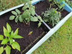 How to Make a Raised Bed Vegetable Garden with Recycled Milk Crates