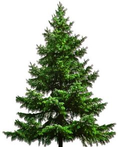 what in the what? you can order real christmas trees online!