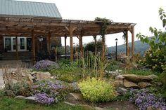 hillsborough vineyard, terraces
