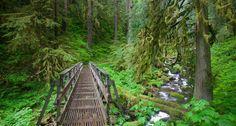 Trail in the Columbia River Gorge National Scenic Area, Oregon -- Craig Tuttle/Corbis