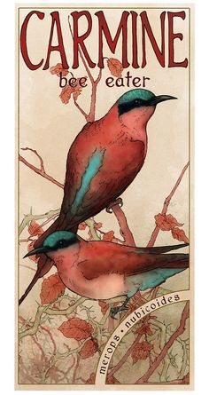 Bird Art Print, Art Nouveau Poster, Nature Illustration, Bee Eaters Giclee Print on Etsy, $28.00