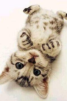 Please, hug me? Cat kitten