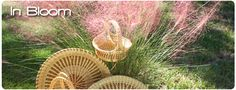 a south carolina girl will always have a few Sweetgrass baskets!