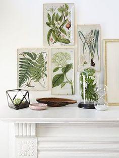 diy home decor, decor crafts, botanical prints, diy decoupag, countri live, decoupage tray, decoupag tray, decorating crafts, craft ideas