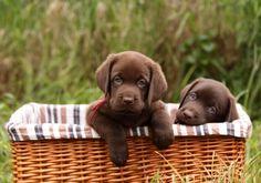 Sweet, sweet babies!!