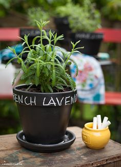 DIY: painted chalkboard herb pots