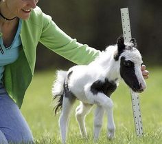 So adorable. My dream could come come true!! Even I have room in my garden for a pony this size :) !!!